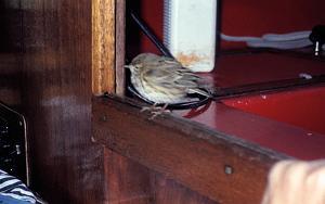 Click image for larger version  Name:juvenile robin.jpg Views:36 Size:212.3 KB ID:1617